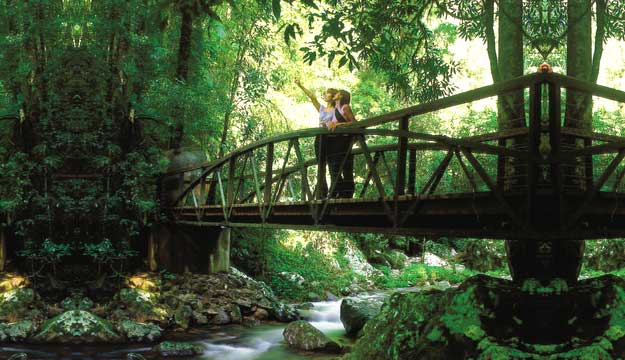 Springbrook National Park