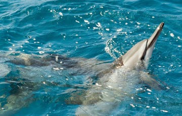 Swim with dolphins in the waters of Hulopoe Bay on Lanai