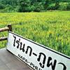 Napa-Phupa Strawberry Farm (ร้านไร่นภ-ภูผา)
